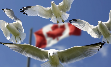 加拿大央行宣布逐步退出量化宽松