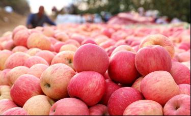 晋廷:影响苹果期货价格的因素有哪些?
