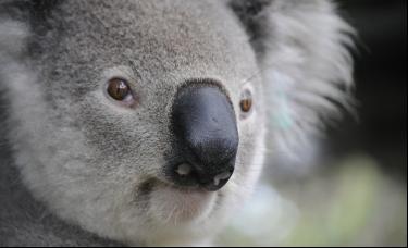 澳洲大选后股市涨至11年新高,布油升破73美元